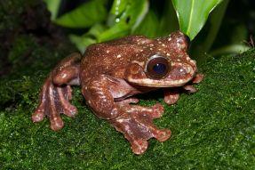 flyingfrog